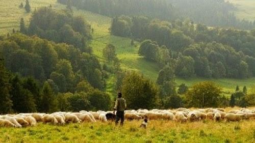 Attractivité des métiers de l'élevage