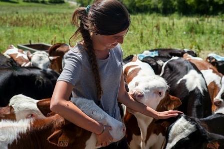 Diversité des installations en élevage