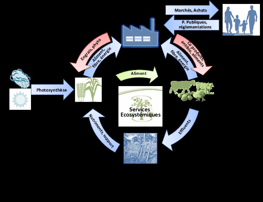 bioéconomie
