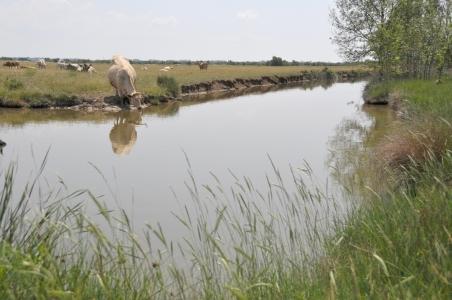 Acceptabilité sociale de l'élevage en France